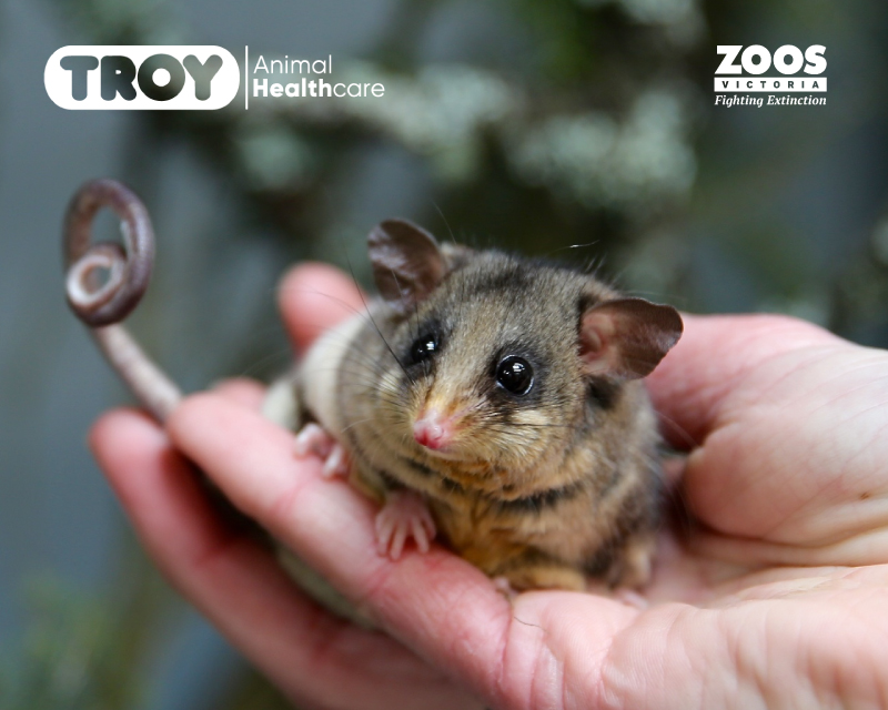 //troylab.com.au/wp-content/uploads/2020/05/Troy-and-Zoos-Victoria-for-Web-and-Social-Media-25-May-20.jpg